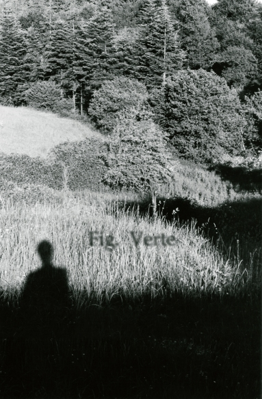 Fig Verte-2003